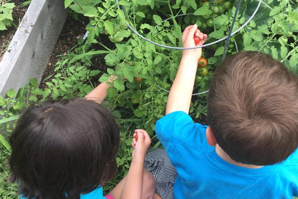 Children in one of our summer gardens